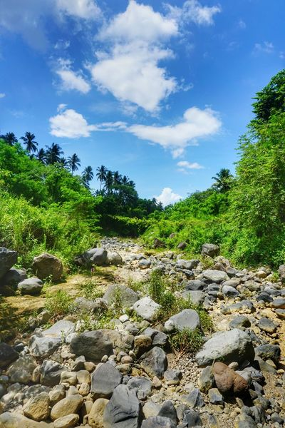 Cloud - Sky Nature Outdoors Tree Day No People Sky Growth Landscape Scenics Beauty In Nature Philippines ❤️ Philippines Sariaya Quezon A6000photography A6000 Eyeem Philippines Nature Tree Botany Beauty In Nature River Dried River