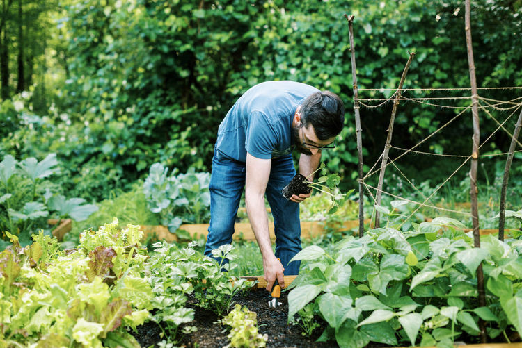 Man working on plants