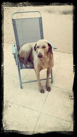 Meu cão !