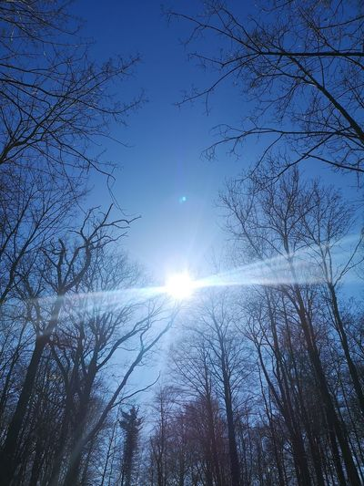 Low angle view of bare trees against bright sun