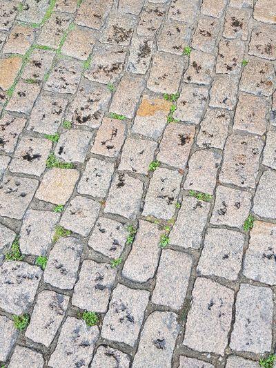 secuencia Walk Sendai Empedrado La Naturaleza Se Abre Paso Full Frame High Angle View Close-up Paved Walkway Paving Stone Stone Tile Rough Textured  Ground