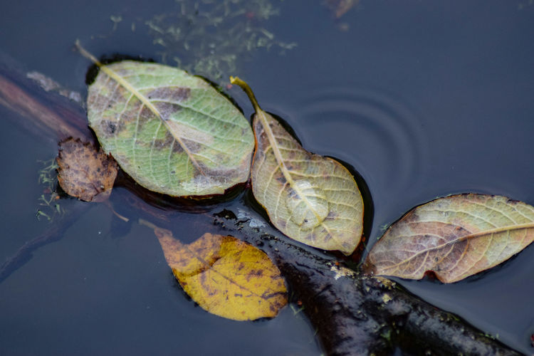 Backgrounds Background Outdoors Outdoor Photography Outside Up Close My Unique Style Water Ripples Pond Beauty In Nature Beauty Of Nature Beauty Is Everywhere  Colors Focus Abstract Leaf Close-up Animal Themes Fall Change Fallen Leaf Autumn Season  Leaves Autumn Collection