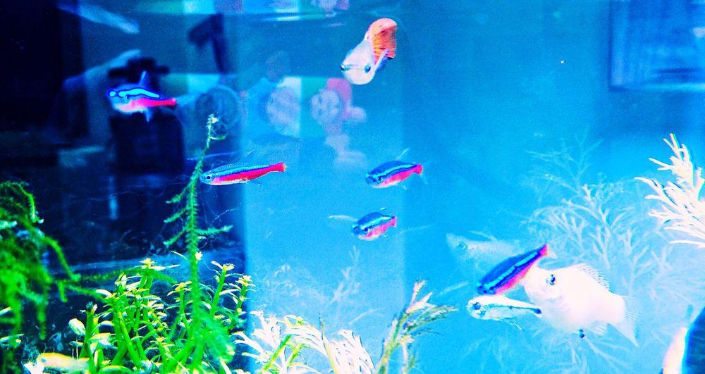 IPhone Fish