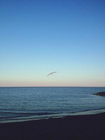 Mare Spiaggia Gabbiano Skyline Tramonto Italy Romantic Tramonto Sul Mare Estate Albenga