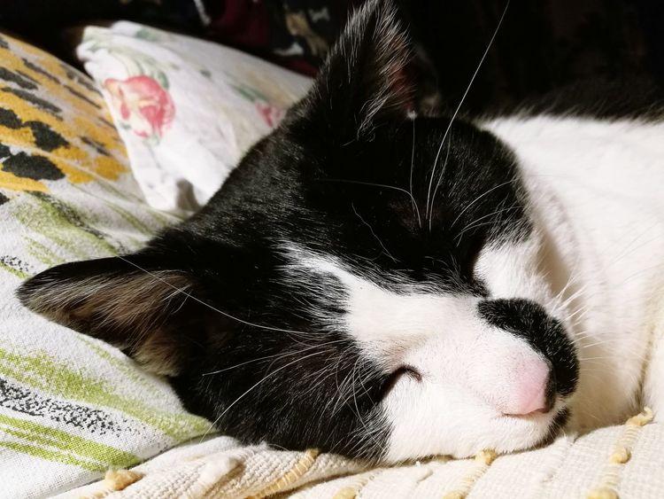 Franciszek Pets Domestic Animals Cat Cats Of EyeEm Cats 🐱 Love ♥ MyLove❤ Poland 💗 Włochy Warszawa  Sleeping Beauty Sleeping Cat