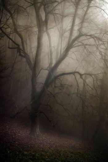 Dark Tree
