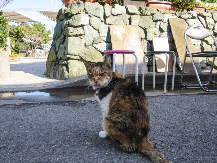 Stray Cat Gato Cat Funny Cat Enjoying Life Streetphotography Animals at Enoshima 江の島 in Japan