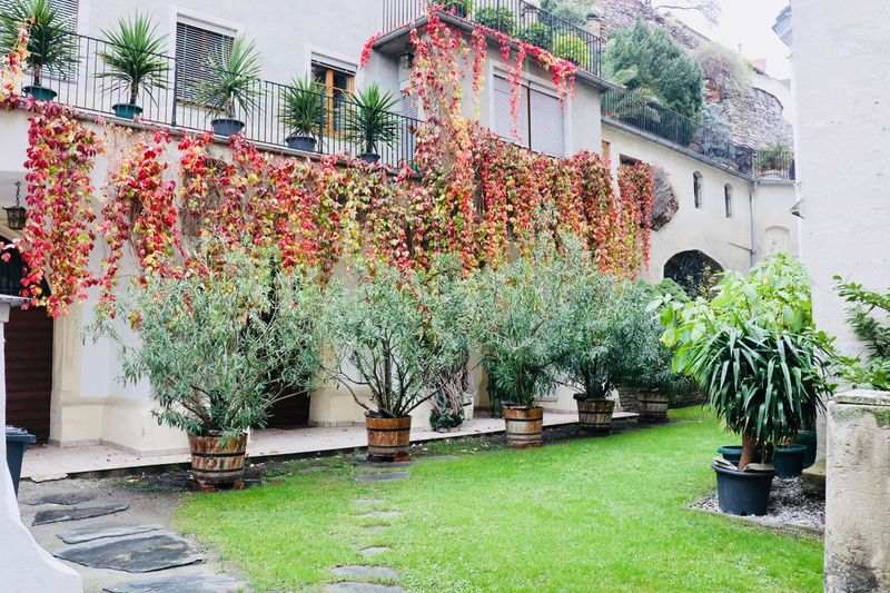 Autumn Foliage in Krems courtyard Courtyard  Autumn colors Building Exterior Built Structure Plant Architecture Growth Building Potted Plant Day Nature Green Color No People Outdoors City Residential District Wall - Building Feature Tree