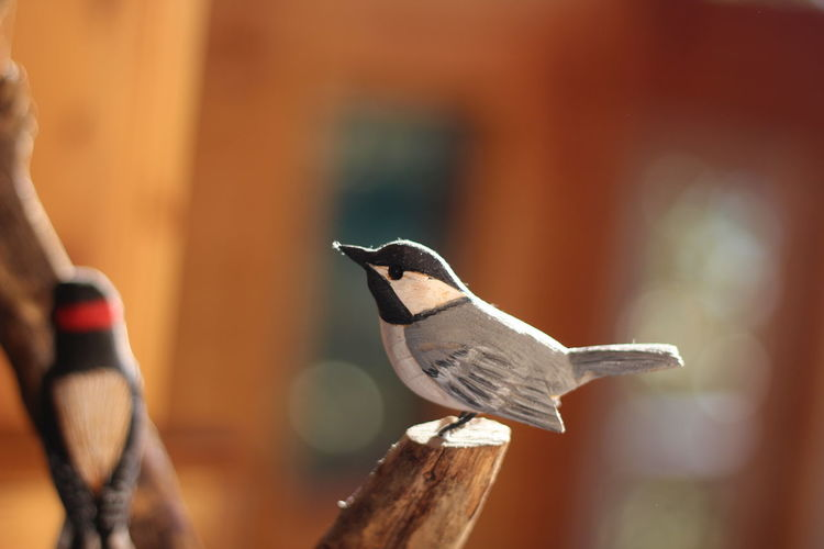 Artificial birds on branch