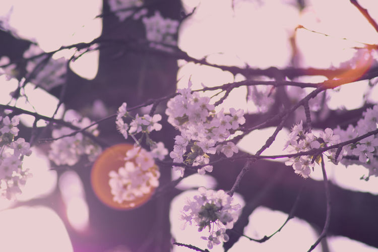 Beauty In Nature Branch Close-up Day Flower Fragility Freshness Growth Nature One Person Outdoors People Tree