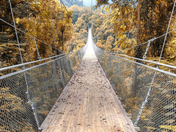 Suspension Bridge Situ Gunung - Sukabumi Olympus Situgunung Sukabumi Sukabumi Bridge Outdoors Photography Plant Raynaldk Situgunung SukabumiIndonesia Suspension Bridge Tree