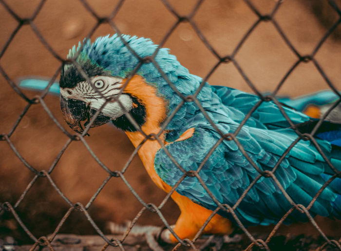 Close-up of chainlink fence in cage at zoo