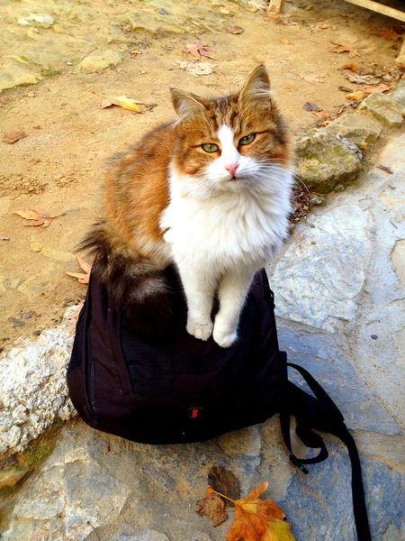Arzuphotography2014 Pamuk Kedi Aşkı Kedi Hayatakarken