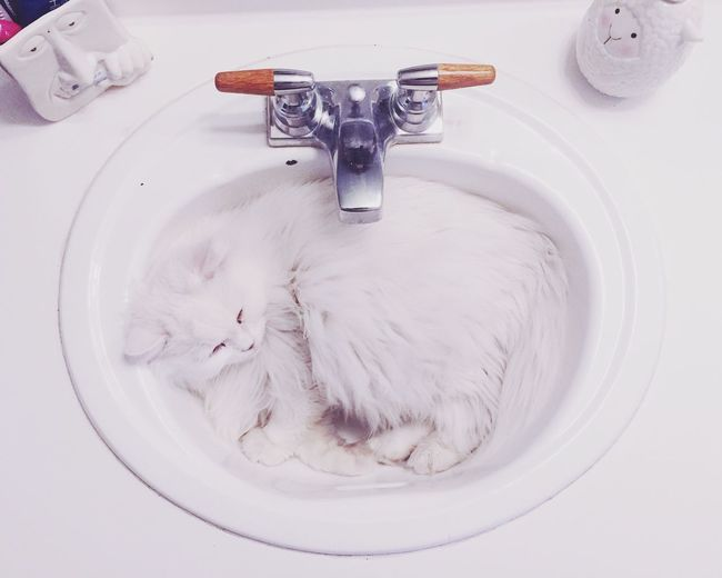 High angle view of cat in sink
