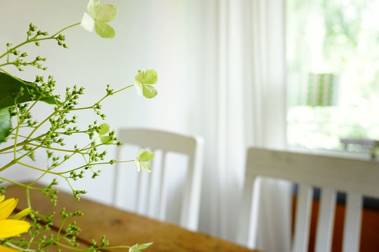 at home Summer Hortensia Delicate Flower Collection Interior Design Leaf Home Interior Window Beauty Domestic Room Close-up Plant Blooming Plant Life