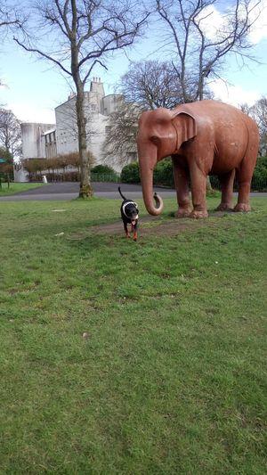 Doberman  Park - Man Made Space Grass African Elephant First Eyeem Photo