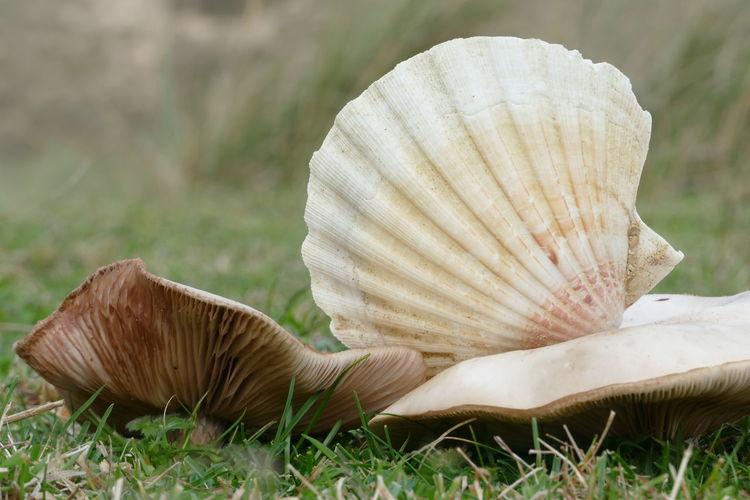 Shell and fungi