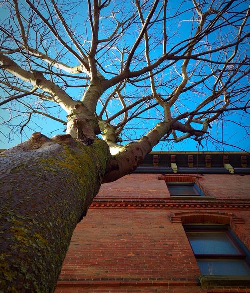 Things are Looking Up Building Building Exterior Tree Sky Blue Sky Ladyphotographerofthemonth Sunny Day Architecture Bricks Perspective