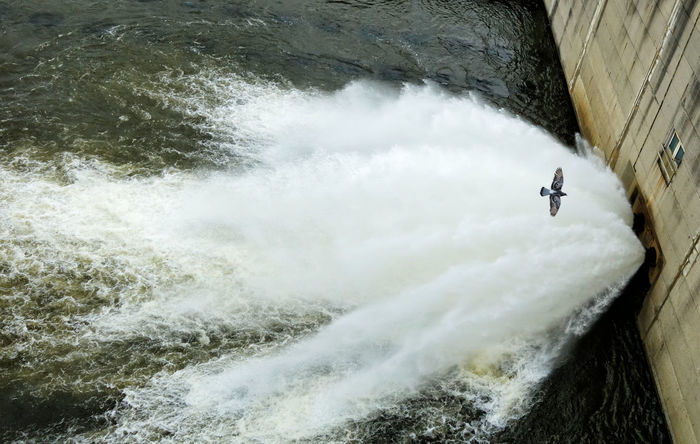 The Spillway of a dam with a pigeon caught in flight. Architecture Dam Dam Reservoir Day High Angle View In Flight Motion Nature No People Outdoors Pigeon River Spillway Water Waterfall The Week On EyeEm