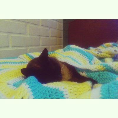 Sólo se que es en invierno cuando quiero ser gato :c aL trabajo!