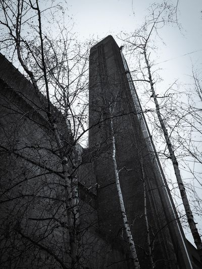 Tate Modern Tate Places Of Interest Tree Low Angle View Bare Tree Architecture Branch Built Structure Building Exterior Sky No People Tower Day Outdoors Growth City Tall Nature Skyscraper London City Outdoor Photography