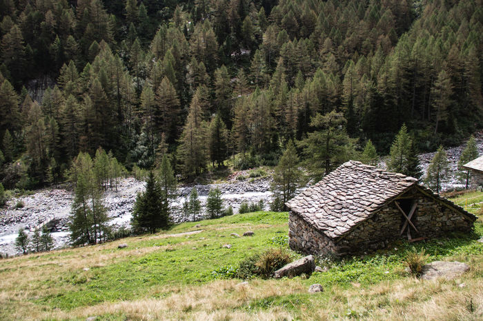 Green Itay Path Trekking Architecture Beauty In Nature Built Structure Forest Growth House Landscape Mountain Nature No People Non-urban Scene Outdoors Pathway Pathway In The Forest Plant Scenics - Nature Stream Stream Of Water Tranquility Trekking Path Valtellina