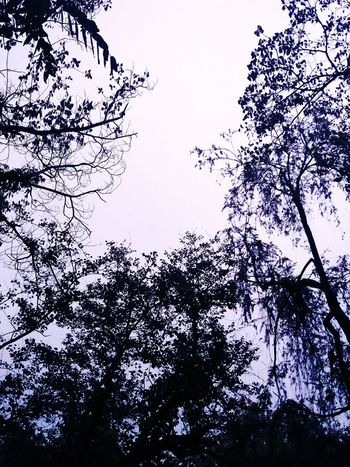 Nature Nature Photography Naturelovers Dawn Pleasant Art Shadow No People Pattern Heart Close-up Green Tree Patterns In Nature Branches And Sky Branches Leaves Noflowers Shades Of Green  Leaves🌿 Design Aura Monsoon Drops Sky Sky And Clouds Merge Warmth Focus Split