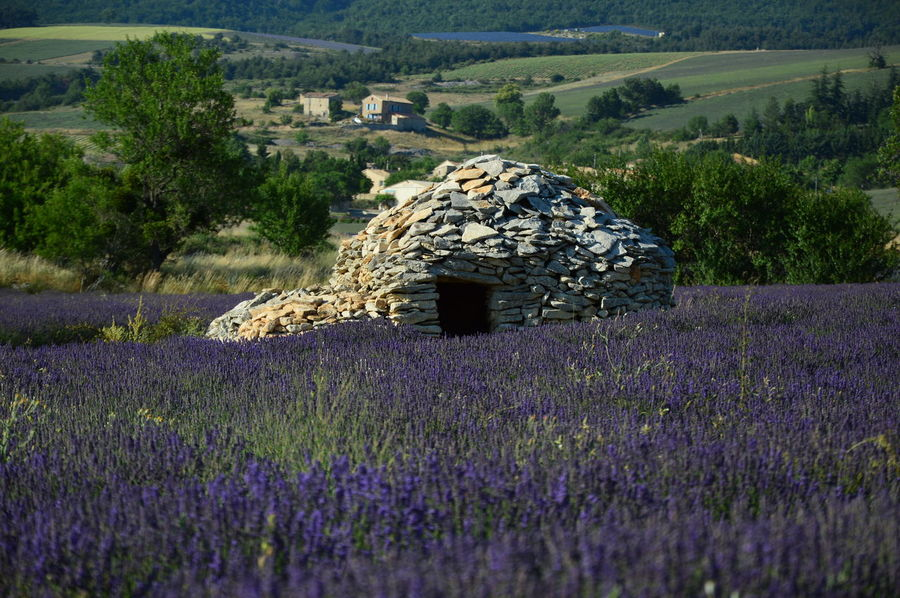 Borie en South of France ,Provence Borie En South Of France ,Provence Lavender Field Agriculture Beauty In Nature Borie Borie En South Of France Field Flower Flowering Plant Growth History House Of Stones Landscape Lavender Lavender Flowers Levander Levander Field Nature No People Plant Purple Rural Scene South Of France Stones Tranquility