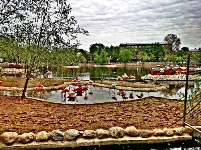 зоопарк московскийзоопарк фламинго Zoo Flamingo Pink