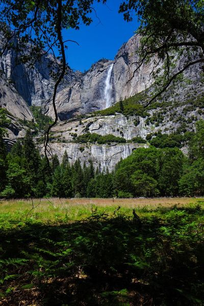 Yosemite falls EyeEm United States Of America Tree Area Waterfall Photography Yosemite National Park Plant Tree Growth Nature Beauty In Nature No People Water Sky