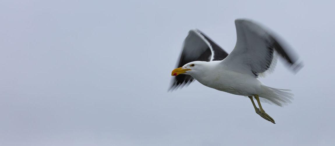 Flying Kelp