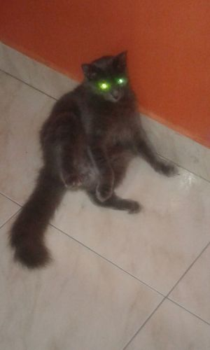 Instant Cat Cat Watching Cat♡ Catlovers Cats Ovni Ovni ? Extraterrestrial  Lights Light - Natural Phenomenon