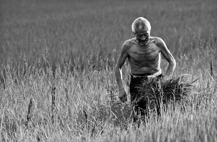 EyeEm Best Shots EyeEm Best Shots - Black + White Field Grass Grassy Nature Oldman Outdoors Portrait Reap Rural Scene The Portraitist - 2016 EyeEm Awards