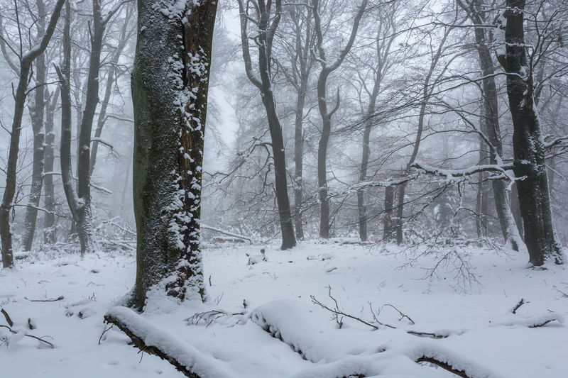 Winter im Nationalpark Hunsrück-Hochwald Bare Tree Beauty In Nature Cold Temperature Day Forest Hunsrück Landscape Nature No People Outdoors Scenics Snow Tranquil Scene Tranquility Tree Weather Winter