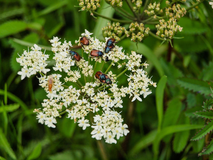 Beetle Insect Nature Flower Flowering Plant Plant Invertebrate Insect Animal Wildlife Animal Themes Animals In The Wild Fragility Vulnerability  Freshness Beauty In Nature Animal Growth Day Close-up Group Of Animals No People Bee Flower Head Pollination Outdoors Purple
