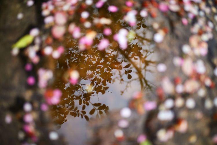 High angle view of plants reflecting on lake