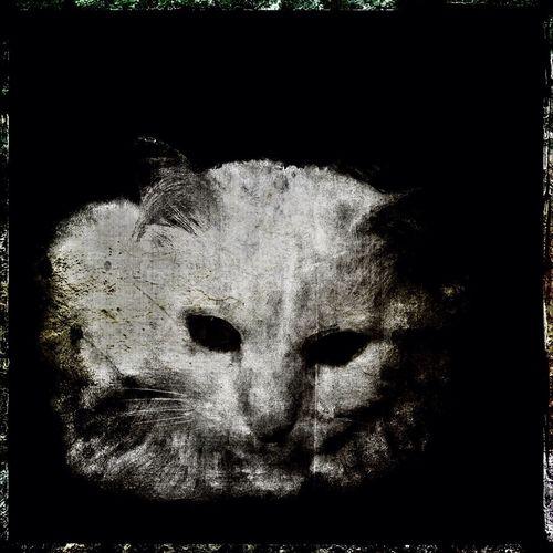 Cat NEM Black&white