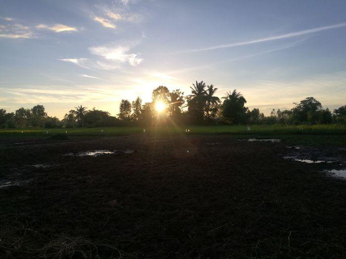 The sun Sun