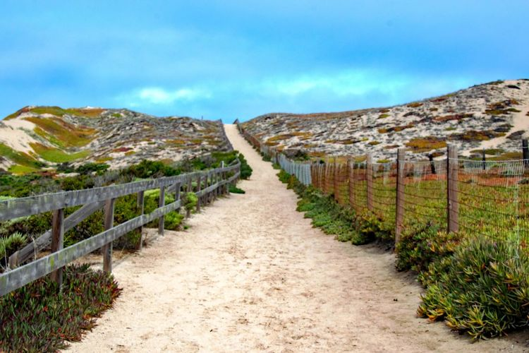 Marina State Beach trail Sky Nature No People Scenics - Nature Plant Day The Way Forward Landscape Direction Footpath Environment Tranquil Scene Tranquility Travel Destinations Cloud - Sky Land Outdoors #beach #dunes