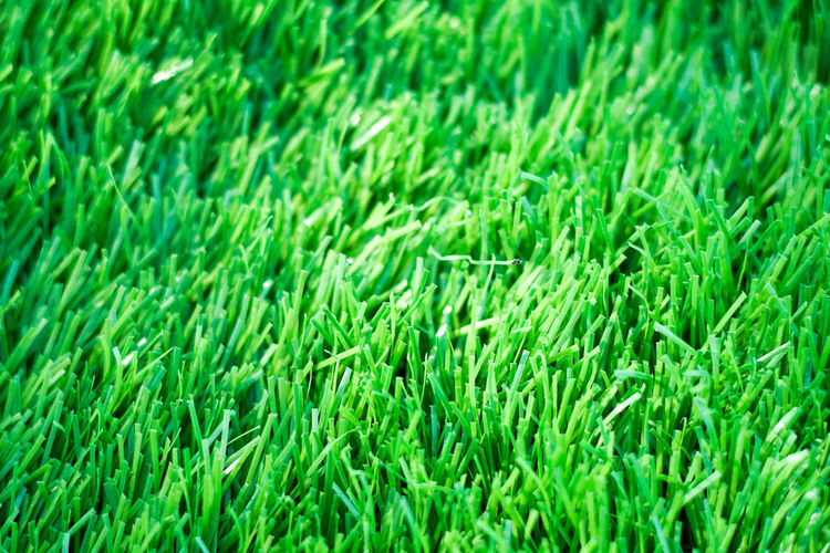Backgrounds Close-up Day Field Freshness Full Frame Grass Green Color Growth Nature No People Outdoors