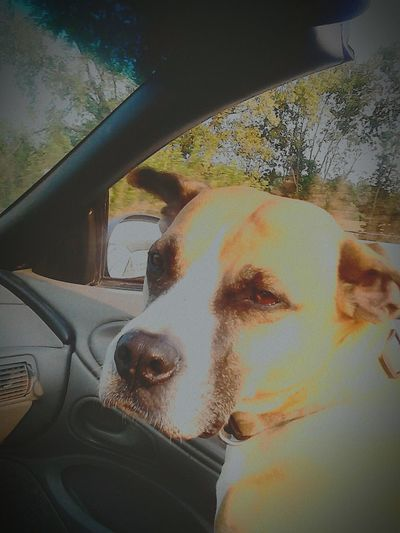 Unconditional Love My Shotgun Rider! Enjoying Life Hanging Out Enjoying The Sun Drop-top!