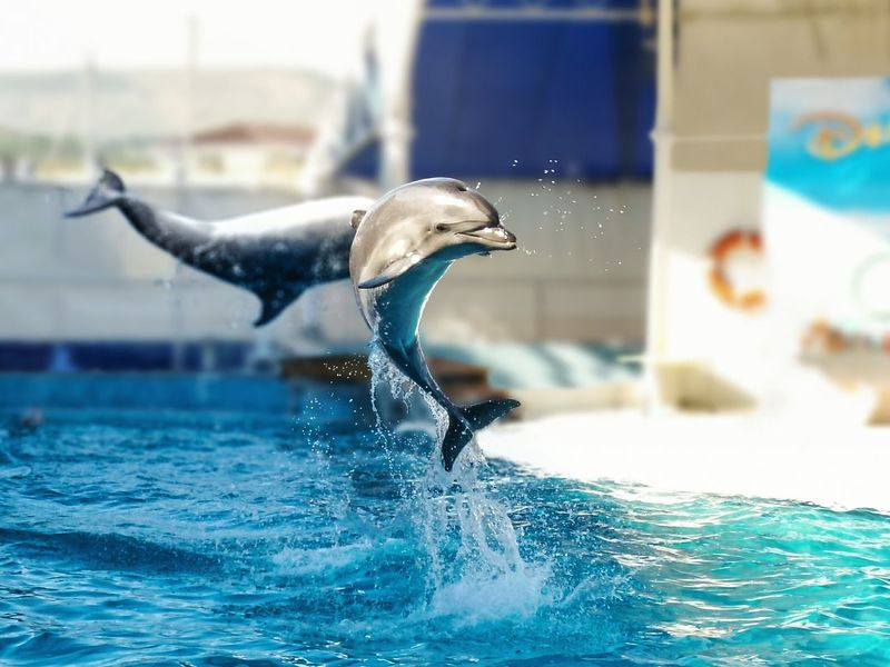 Dolphin Nature Mammal Water Sun Jump Fly HighSplashing Water Swimming Pool Horizontal Motion Outdoors No People Day Animal Themes The Week On EyeEm