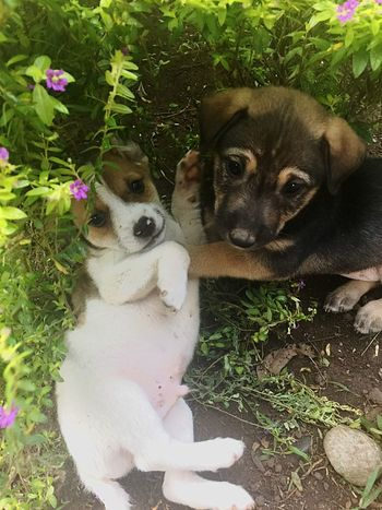Puppies at play! 😍🐶 Dog Domestic Animals Animal Themes Puppy Plant No People Day Nature Outdoors Flower
