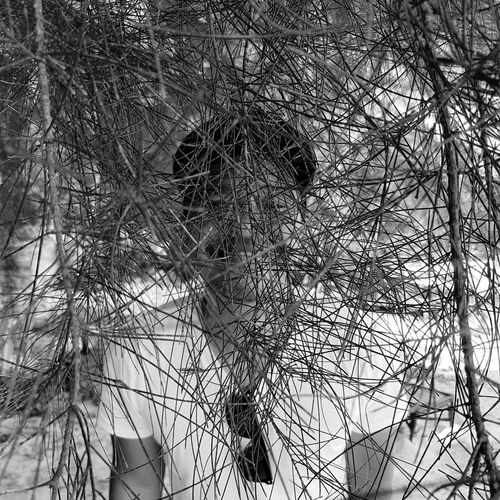man behind the trenches Blackandwhite Blackandwhite Photography Tree Branch Backgrounds Complexity Sky Close-up Leaf Vein Detail