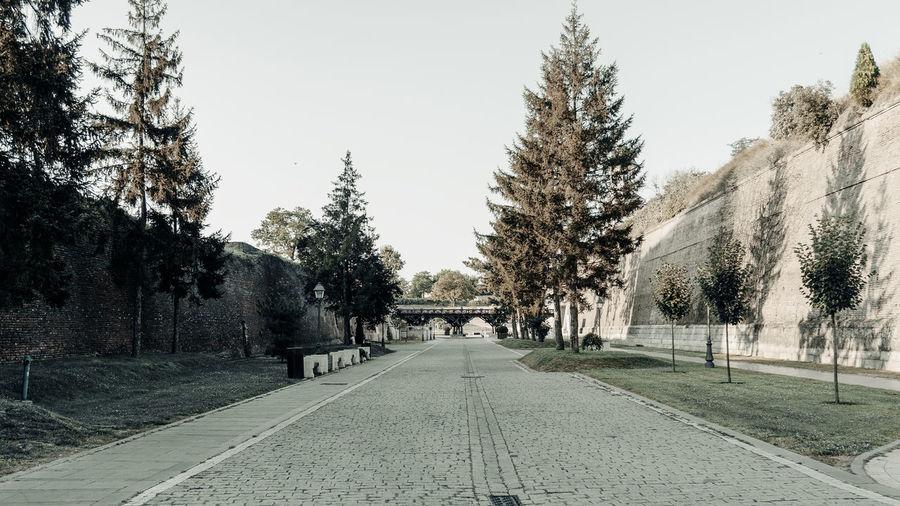 Footpath amidst trees against sky