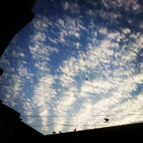 Nofilter Evening About_to_fly Timing instafly webstagram crow cloudy cloud_design skyline cloudlover silhouette shoot