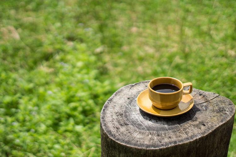 Close-up of black tea on tree stump