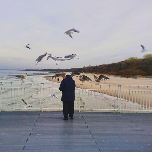 hungry seagulls