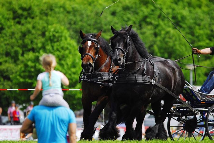 Powerhorse Competition May 2016 Duiven Duiven