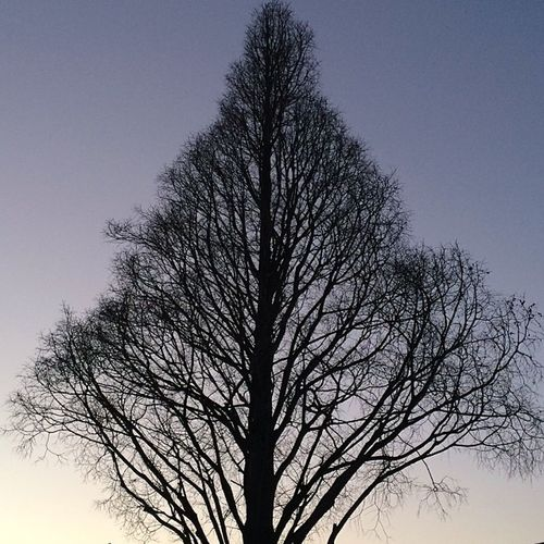 #inscribed #tree against the #twilight #nofilter